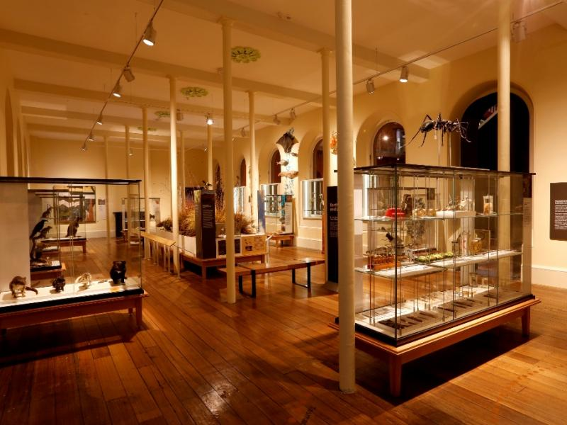 Vision Showcase / Earth and Life Gallery - Tasmanian Museum & Art Gallery